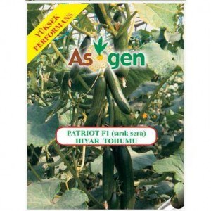 Asgen Patriot F1 Cucumber Seed