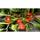 Natural Hot Cherry Pepper Seed(20 Seed)