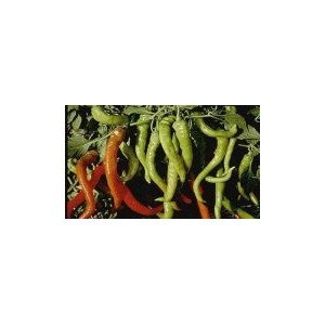 Natural İtalian Pepperoncini Pepper Seed(20 Seed)