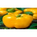 Natural Sweety Golden Cal Worder Bell Pepper Seed(20 Seed)