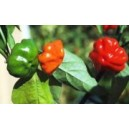 Natural Bundle Pepper Seed(20 Seed)