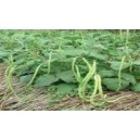 Natural Seat Cow Pea Seed(25 seed)