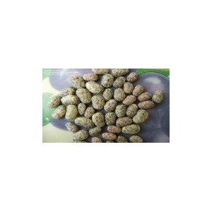 Natural Blue Speckled Bean Seed(30 seed)