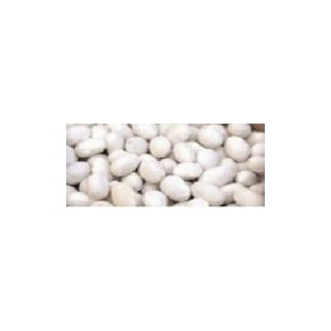 Natural Fat White Bean Seed(30 seed)