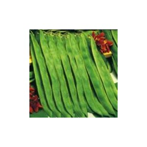 Natural Runner Bean Seed(20 seed)