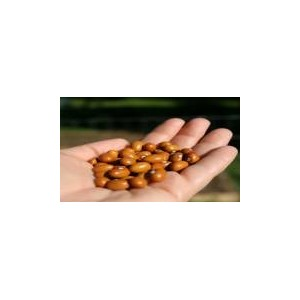 Natural Gold Bean Seed(20 seed)