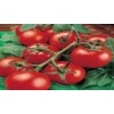 Natural Money Maker Tomato Seed(20 seed)