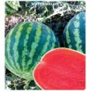 Arzuman Crimson Sweet Watermelon Seed(10 gram)