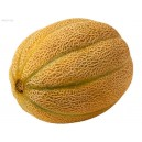 Natural Manisa Sugar Melon Seed(20 seed)