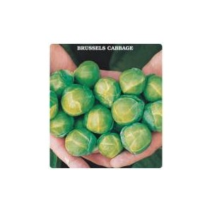 Brussels  Cabbage Seed(10o seed )
