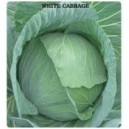 White Cabbage Seed(10 gram)