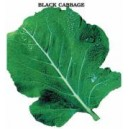 Black Cabbage Seed(10 gram)