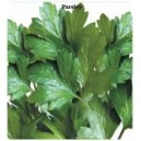 Arzuman Extensive Leaf Parsley Seed(25 gram)