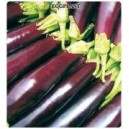 Special Kemer Eggplant Seed(10 gram)