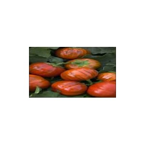 Natural Red Eggplant Seed(20 Seed)
