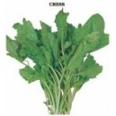 Broad Leaved Cress Seed(10 gram)