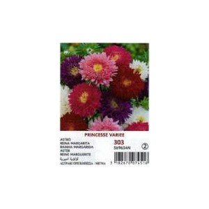 Vilmorin Big Princess Daisy Flower Seed
