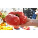 Natural Giant Belgium Pink Tomato Seed(20 seed)
