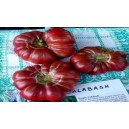 Natural Purple Calabash Tomato Seed(20 seed)