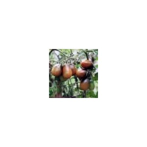 Natural Black Plum Tomato Seed(20 seed)