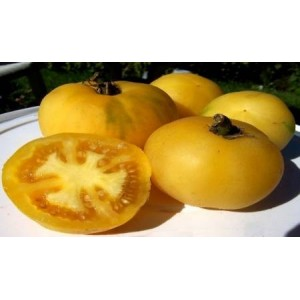 Natural Yellow Lemon Tomato Seed(20 seed)