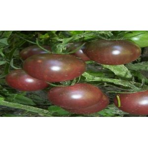 Natural Black Cherry Tomato Seed(20 Seed)