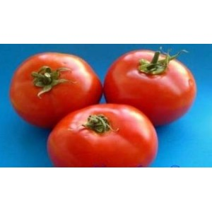 Natural Winter Tomato Seed(20 seed)
