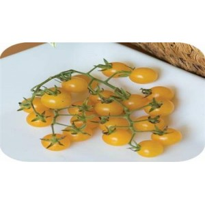 Natural Yellow Currant Tomato Seed(20 seed)